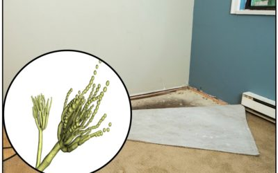 Case Study: A Letter from A Reader with a Severe Mold Situation