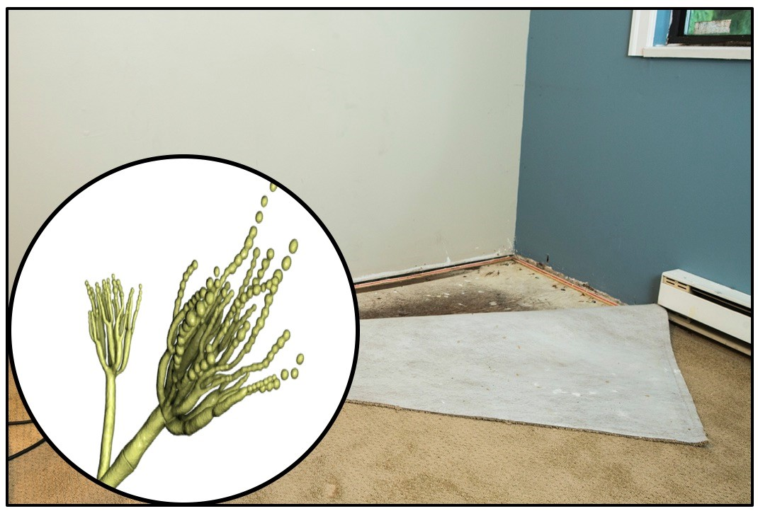 Questions about mold remediation and mold treatment.